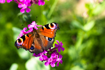 Butterfly and flowers.