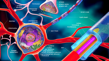 colorful 3d illustration of a neuron and cell-building with desc