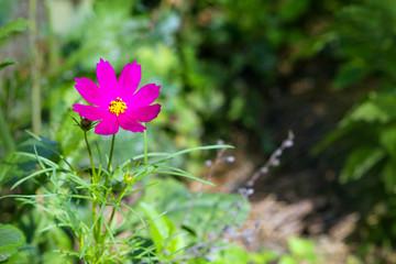 розовый цветок на зеленом фоне окружающей природы.