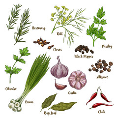 Full color realistic sketch illustration of culinary herbs and spices.