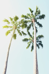 Summer Travel Vacation Concept. Beautiful Palms on Blue Sky Background.
