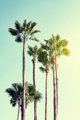Summer Vacation Concept. Beautiful Palms on Blue Sky Background. Toning.