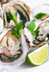 Fresh opened oyster on plate with lime and green