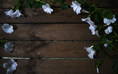 White natural flowers on a wooden background.