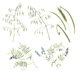 Hand-drawn botanical illustration of the wild flowers and grass. Natural drawing isolated on the white background. Meadow plants.
