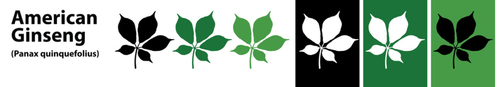 american ginseng leaves vector different colors