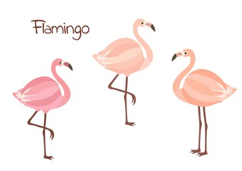 Cute flamingo birds