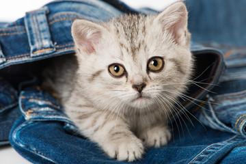 Kleines Kätzchen in Jeans