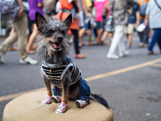 Bangkok dog