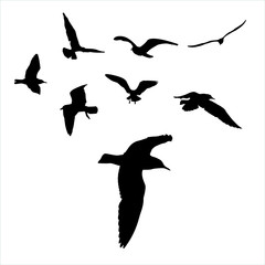 set - seagull silhouette on white background collection