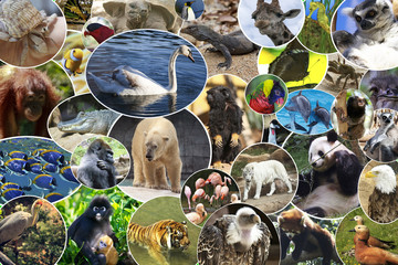 Collage of various animals and birds