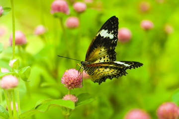 The Butterfly and flower in public park, Background,garden