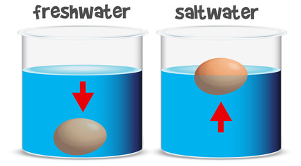 Science experiment for freshwater and saltwater