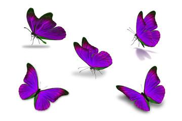 fifth purple butterfly