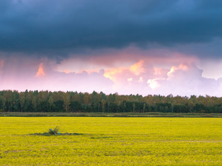 Meadow with Forest Edge during sunset