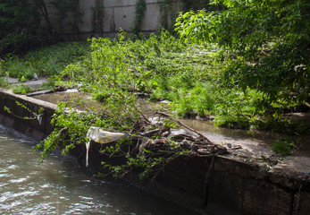 Water pollution. Garbage on the urban stream bank