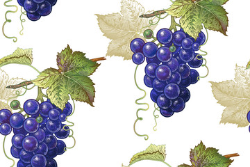 Botanical seamless pattern with grapes.