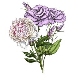 Hand drawn bouquet of eustoma and peony flowers isolated on white background. Botanical vector illustration.