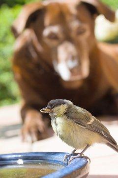 Meise und Hund