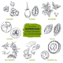 Superfood, hand drawn sketch