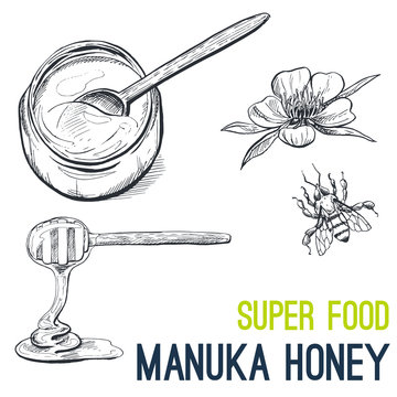 Manuka honey, Super food hand drawn sketch vector