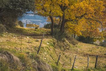 Otoño en el monte / Fall in the mountains