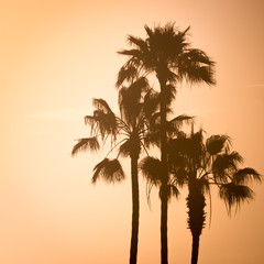 Palm Trees at Sunset West Coast California