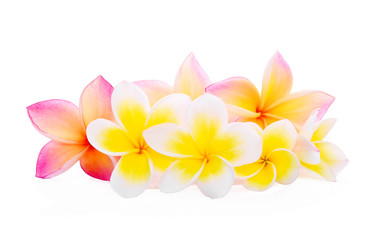 Tropical flowers frangipani (plumeria) on white background