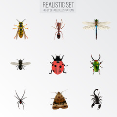 Realistic Emmet, Midge, Spinner And Other Vector Elements. Set Of Bug Realistic Symbols Also Includes Ant, Wisp, Gnat Objects.