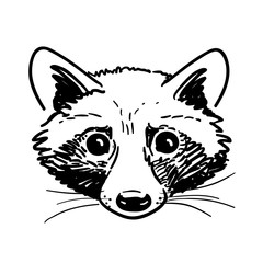 Pen and ink raccoon head sketch