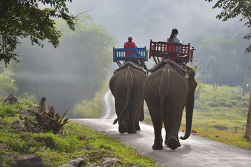Two female tourists ride elephants through the jungle in northern Laos.