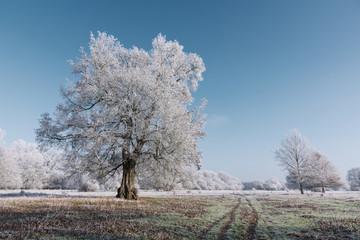Reif an den Bäumen und auf den Feldern Norddeutschlands