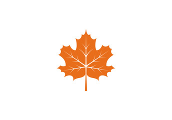 Maple leaf icon or logo in modern line style. Vector illustration on a white background.