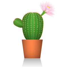Cactus in a red clay pot. Flowering plant. White background. Isolated. Realistic picture. Vector illustrations.