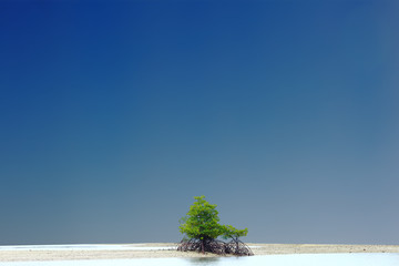 A Little Mangrove Tree on Empty sand area, forest background