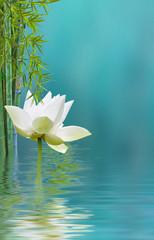 fleur de lotus et bambou