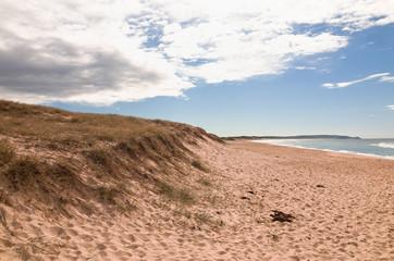 Beautiful Australian Beach Grassy Dune on the Pacific Ocean