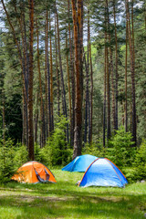 Colorful tents scattered in a pine forest in Bulgaria in portrait view