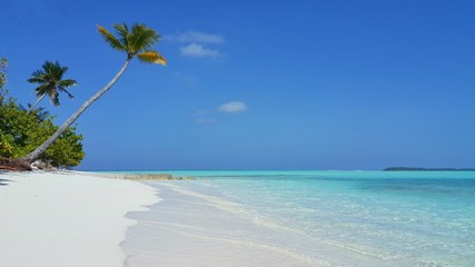 P00601 Maldives beautiful white sandy beach background with palm trees on sunny tropical paradise island with aqua blue sky sea water ocean 4k