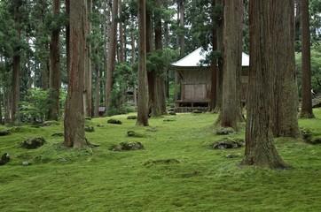 苔がきれいな神社の境内