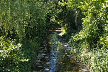 Stream hidden in a forest
