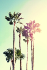 Summer Vacation Concept. Beautiful Palms on Blue Sky Background. Toning. Selective focus.