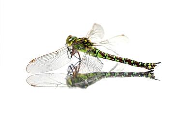 Der Flügel einer Libelle