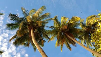 P00776 Maldives white sandy beach coconut palm trees on sunny tropical paradise island with aqua blue sky sea ocean 4k
