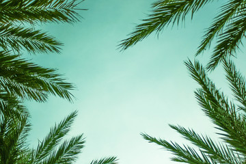 Exotic Palm Tree Leaves Border, Horizontal