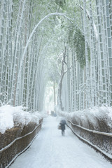 Deurstickers Bamboo Bamboo forest in snow