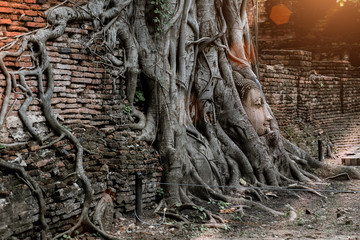 Ayutthaya Buddha Head statue with trapped in Bodhi Tree roots at Wat Maha That (Ayutthaya). Ayutthaya historical park ,Thailand