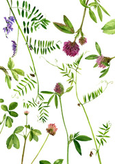 watercolor drawing flowers and plants