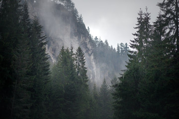 Forest in the mountains on a cloudy day