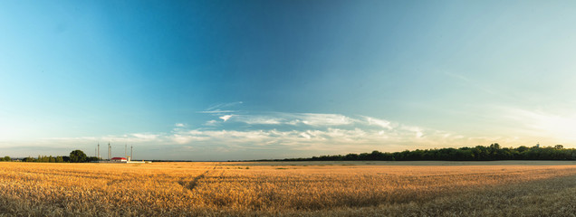 Agricultural landscape panorama. Rural summer landscape - wheat field. Fields of wheat blue sky